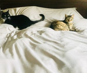 furry babies in bed