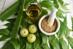 Ayurvedic herbs neem leaves , neem oil , amla berry , amla powder , aloe vera for Ayurvedic Oil or Herbal Hair Oil preparation ingredients. Indian Ayurveda treatment for hair and skin.